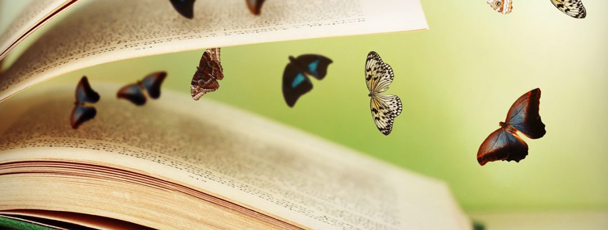 vlinders in boek